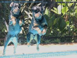 Blue and Skye owned by Marilia Hoyle-JHB (196)500.jpg